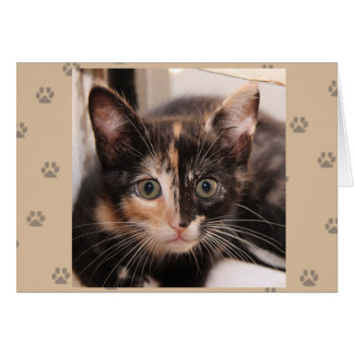 Greyfoot Cat Rescue Tortie Card