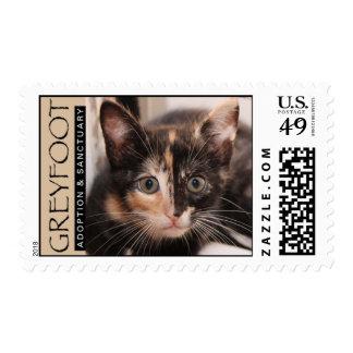 Greyfoot Cat Rescue Tortie Postage Stamp