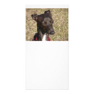 greyhound-3.png card