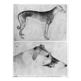 Greyhound and head of a greyhound postcard