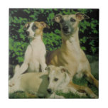 Greyhound and Puppies Tile
