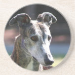 Greyhound coaster