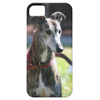 Greyhound dog iPhone 5 case