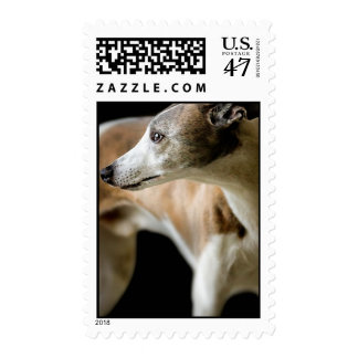 Greyhound Dog  Postage Stamp
