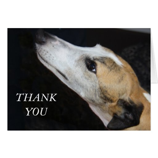 greyhound gift card greyhound dog thank you card zazzle 7893