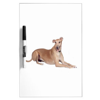 Greyhound (fawn, lying down) dry erase whiteboard