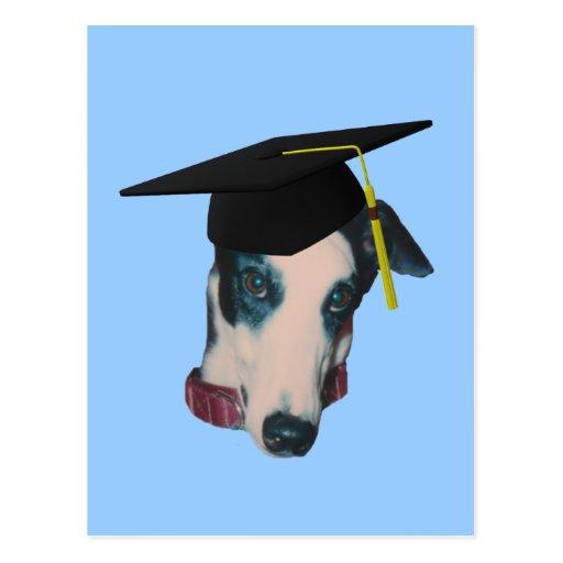 Greyhound In Graduation Cap Funny Dog Postcard Zazzle