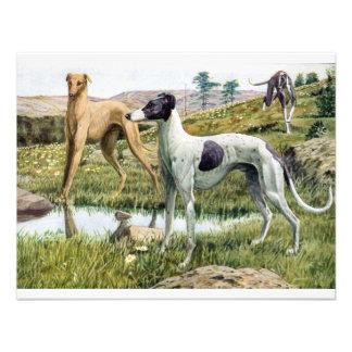 Greyhound Announcements