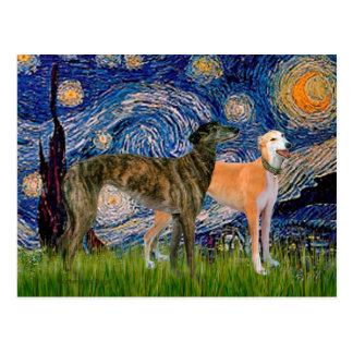 Greyhound Pair - Starry Night Postcard