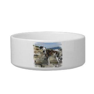 Greyhound Photographs Pet Bowl