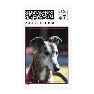Greyhound postage