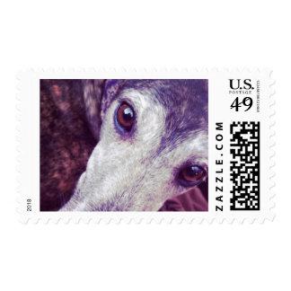 Greyhound Soulful Eyes Stamp Medium
