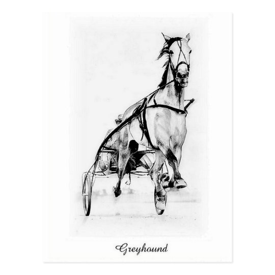 Greyhound Trotter Postcard
