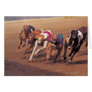 Greyhounds racing on track card