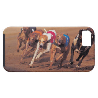 Greyhounds racing on track iPhone SE/5/5s case