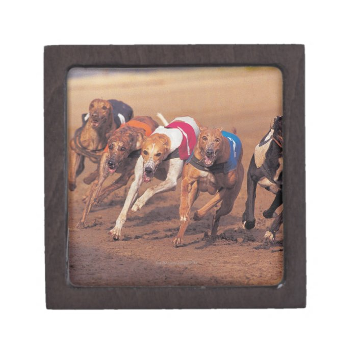 Greyhounds racing on track jewelry box