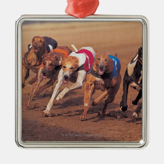 Greyhounds racing on track metal ornament