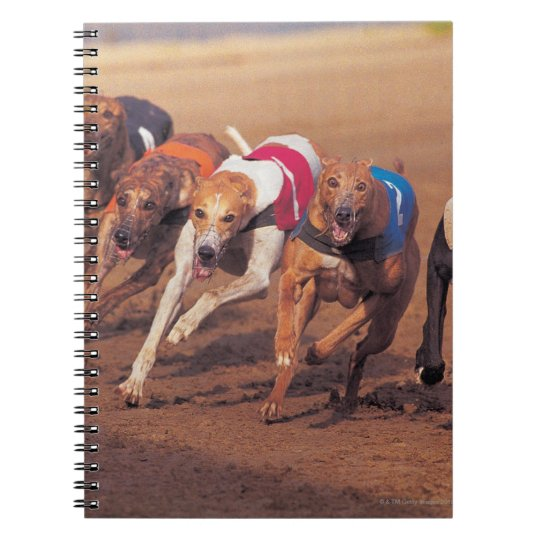 Greyhounds racing on track notebook