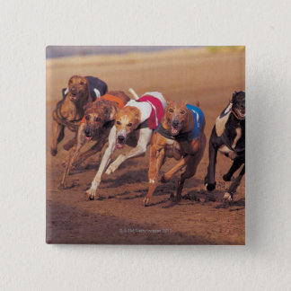 Greyhounds racing on track pinback button