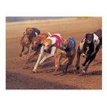 Greyhounds racing on track postcard