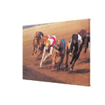 Greyhounds racing on track stretched canvas prints