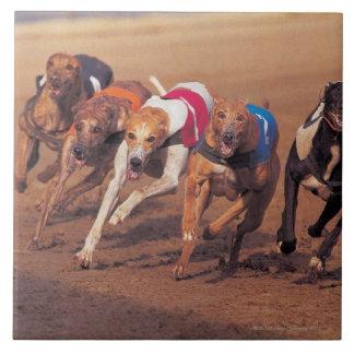 Greyhounds racing on track tile