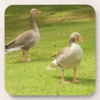 Greylag Geese Beverage Coaster