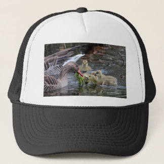 Greylag geese feeding goslings with plants on a la trucker hat