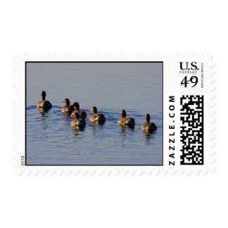Greylag Geese Flock Postage