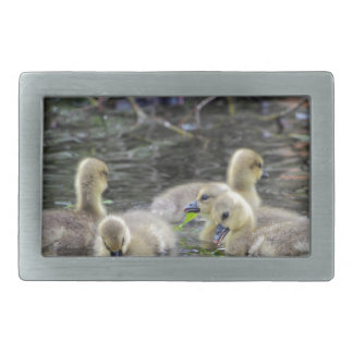 Greylag geese goslings with plants on a lake. belt buckle