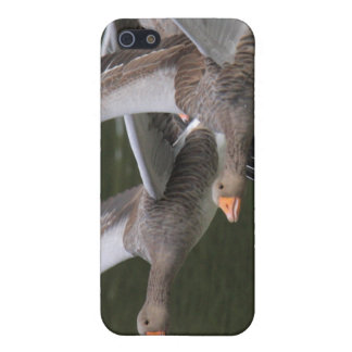 Greylag Geese Case For iPhone 5