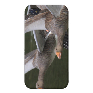 Greylag Geese iPhone 4 Cover