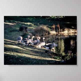 Greylag Geese Print