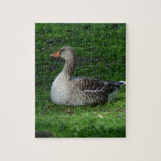 Greylag Goose, Anser anser, Graugans Jigsaw Puzzle