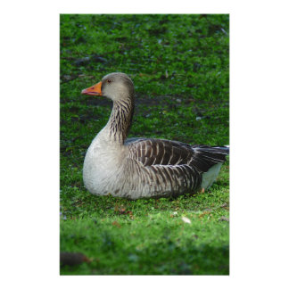 Greylag Goose, Anser anser, Graugans Stationery