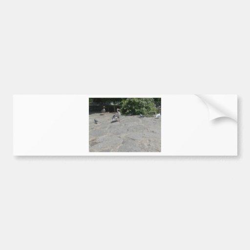 Greylag Goose Bumper Sticker