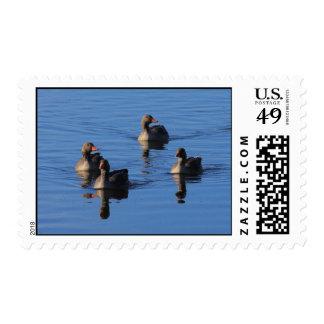 Greylag Goose Family Postage