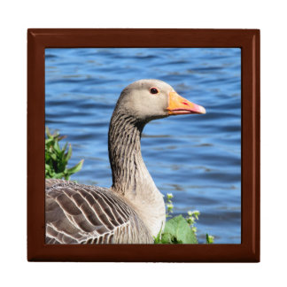 Greylag Goose Trinket Box