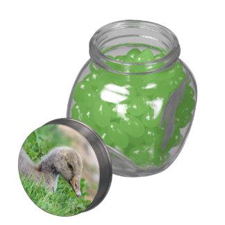 Greylag Goose Gosling Glass Jars