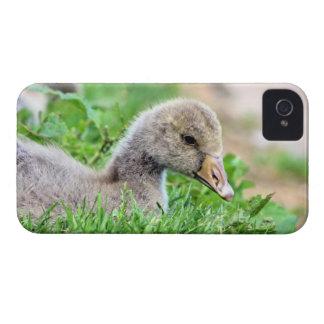 Greylag Goose Gosling iPhone 4 Case