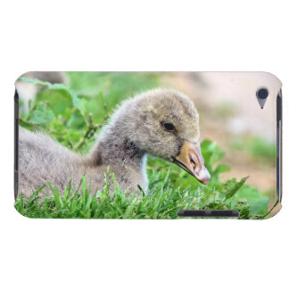 Greylag Goose Gosling iPod Touch Cover