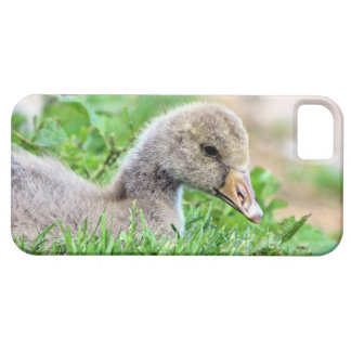 Greylag Goose Gosling iPhone 5/5S Case