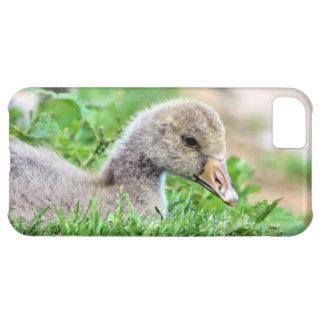 Greylag Goose Gosling iPhone 5C Covers