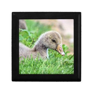 Greylag Goose Gosling Keepsake Box