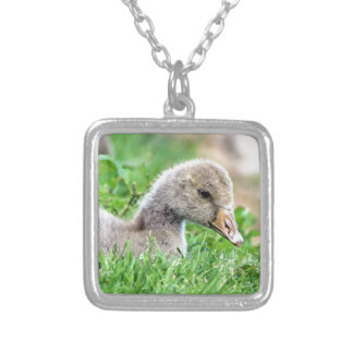 Greylag Goose Gosling Silver Plated Necklace