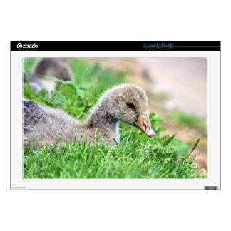 "Greylag Goose Gosling Decal For 17"" Laptop"