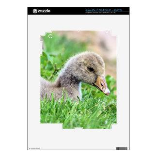Greylag Goose Gosling iPad 3 Decal