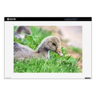 "Greylag Goose Gosling 15"" Laptop Decal"
