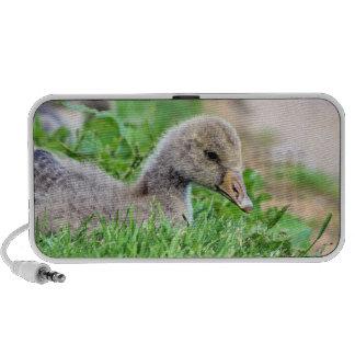Greylag Goose Gosling Notebook Speakers