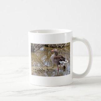 Greylag goose in water coffee mug
